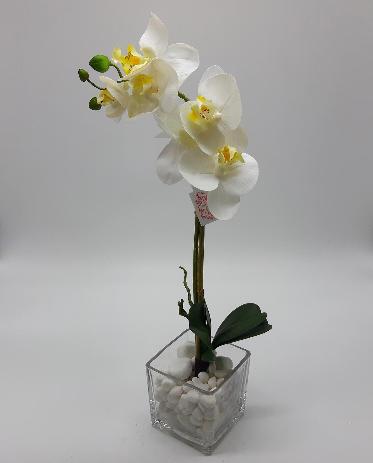 Phalaenopsis Ορχιδέα σύνθεση