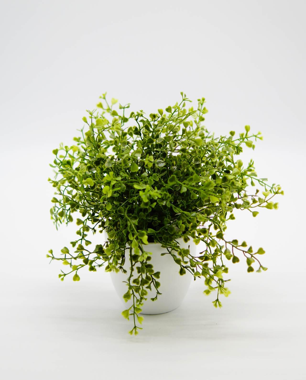 Τεχνητό φυτό σε άσπρο γλαστράκι ύψους 25 cm
